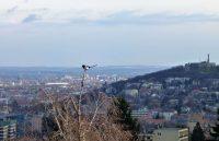 Szarka a város felett Atafoto fénykép foto